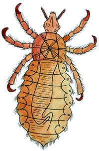 Se epilessia di parassiti di cause