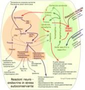 Neuro-endocrino
