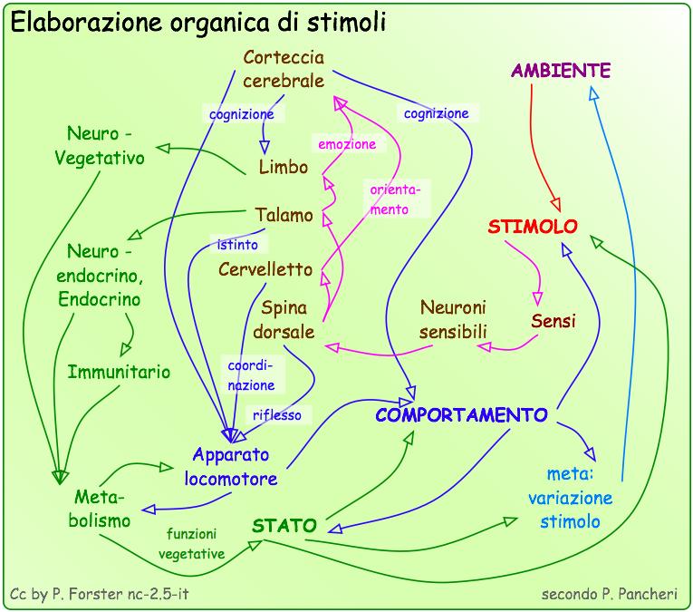 Elaborazione di stimoli