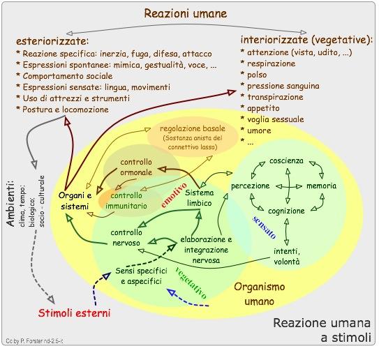 Reazione umana a stimoli