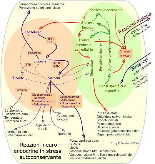 Reazioni neuroendocrine in stress autoconservante